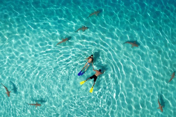 Shark Swim 600 x 400